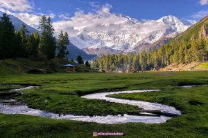 fairy_meadows